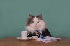 Cat Manager In A Suit Sitting In The Office Royalty Free Stock Images