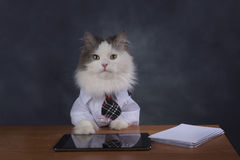 Cat manager misses the office Royalty Free Stock Image