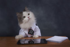 Cat manager misses the office Royalty Free Stock Images