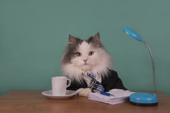 Cat manager in a suit sitting in the office Stock Images