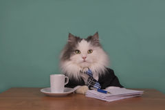 Cat manager in a suit sitting in the office Stock Photography