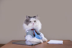 Cat manager in a suit sitting in the office Stock Photo