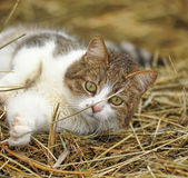 Cat in the Manger Royalty Free Stock Images
