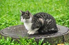 Cat on the manhole Stock Photos