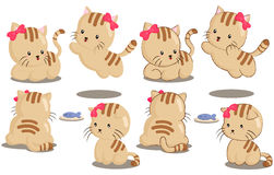Cat. Many pose of cute cat Royalty Free Stock Photo