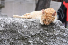 Cat On Marble Royalty Free Stock Image