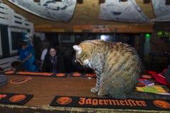 Cat mascot Stock Photo