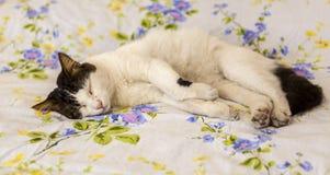 Cat on Mattress royalty free stock photos