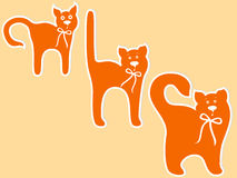 Cat maturing stages. Stages of cat maturing, cartoon vector illustration Stock Image
