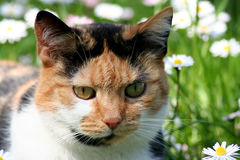 Cat on meadow Stock Photo