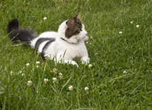Cat on a Meadow Stock Photos