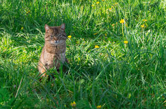 Cat in the meadow Stock Photos