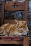 Cat on a medieval chair Royalty Free Stock Photography