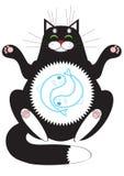 Cat meditating Stock Images