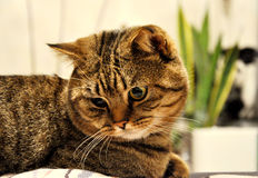 Cat in meditation Stock Images