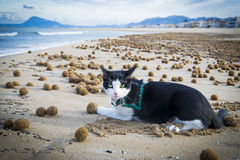 Cat in a mediterranean beach. At Valencia coast, with a view to El Montg Stock Photography