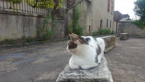 Cat at in the medival small village, France. Cat medival samlle small village france royalty free stock images