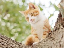 When cat meets dog, frightened cat standing on tree staring at a dog not in camera, adorable kitten ready to escape stock images