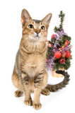 The cat meets New Year. In studio Royalty Free Stock Images