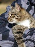 Cat in men's arms Stock Image