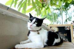 Cat Messenger Fotografía de archivo libre de regalías