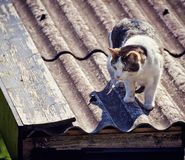 Cat on a metal roof ready to jump Royalty Free Stock Images