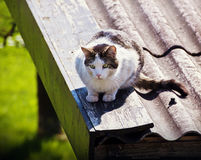 Cat on a metal roof targeting a prey Stock Photography