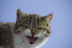 Cat mewing on a roof . blue sky background royalty free stock photos