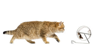 Cat and mice Stock Photography