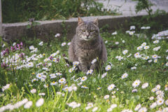 Cat. In the middle of grass and flowers Stock Images