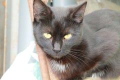 Cat 'Midnight' Royalty Free Stock Photos