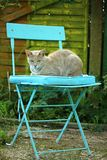 Cat, Mieze, Kitten, Chair Royalty Free Stock Image