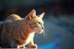 Cat, Mieze, Kitten, Tiger Cat Stock Image