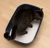 Cat. A cat is in the miidle of a clean litter box stock photo