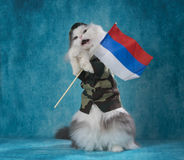 Cat in a military suit with a Russian flag Stock Photos