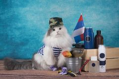 Cat in a military suit with a Russian flag.  royalty free stock photos