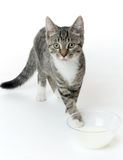 Cat with milk Royalty Free Stock Images
