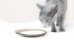 Cat and milk Stock Image