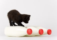 Cat & Milk Royalty Free Stock Photos