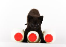 Cat & Milk Royalty Free Stock Images