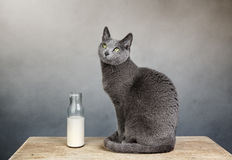 Cat and Milk Bottle Royalty Free Stock Photos