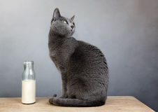Cat and Milk Bottle Royalty Free Stock Images