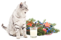 Cat and milk near Christmas tree. Royalty Free Stock Images
