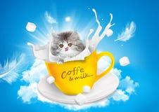 Cat, Milk, Teacup, Persian Stock Photography