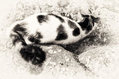 Cat mimicry on a rock Stock Photos