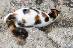 Cat mimicry on a rock. One cat on bird view is prowling on a rock with some mimicry. Portrait of domestic cat in color image. Outdoors Royalty Free Stock Photos