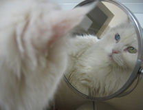 Cat in the mirror. Cat looking at herself in the mirror Stock Photo