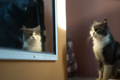 Cat Mirror Royaltyfri Foto
