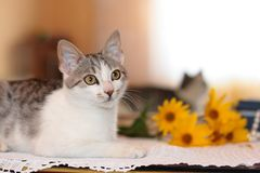 Cat, mirror and flowers Royalty Free Stock Photo