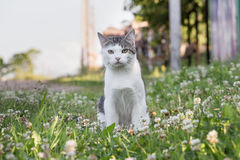 Cat Misha Imagens de Stock